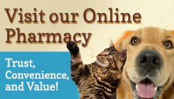 Click to got to the online pharmacy!